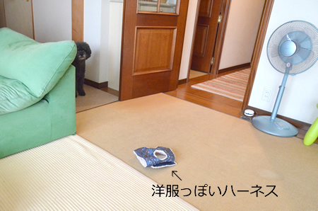 DSC_6039.jpg