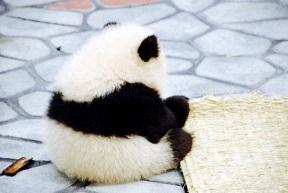パンダ背中