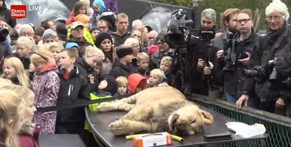 ライオン 殺処分