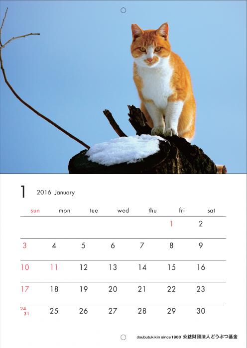 カレンダー2016ねこ1月