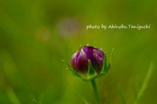 AKI_8256.jpg