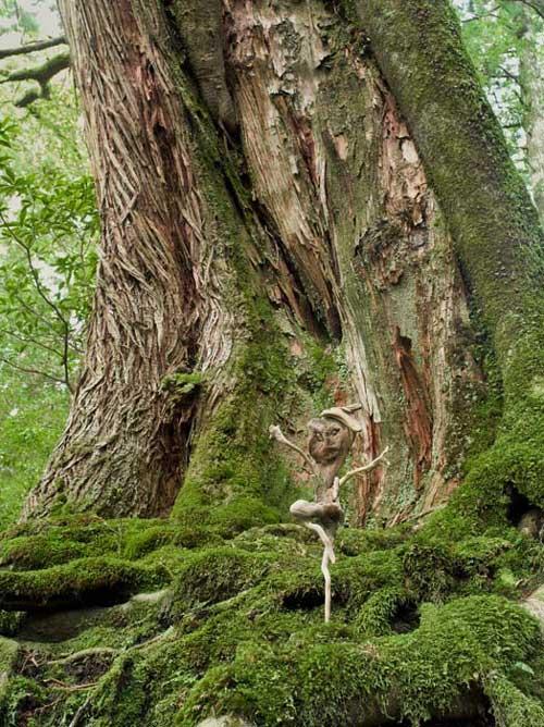 流木のダンサー