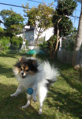 DSCN9773_201510191856140fd.jpg