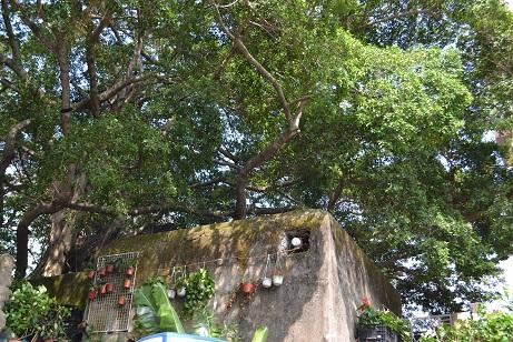スタンレイ緑の壁 2015年9月20日