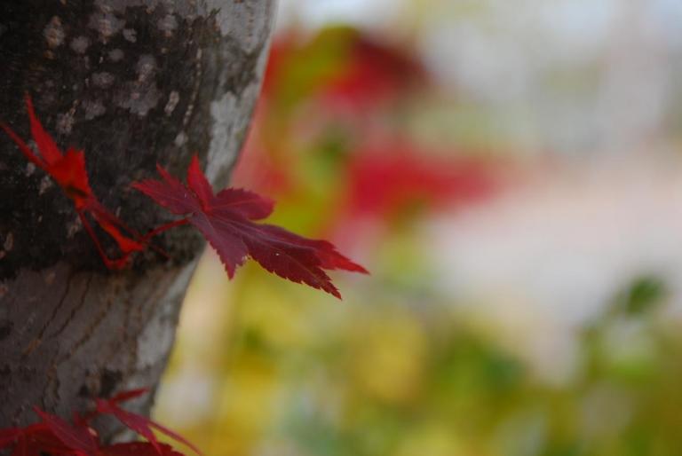 美幌町で紅葉