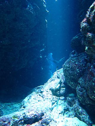 水深12mウミヘビ
