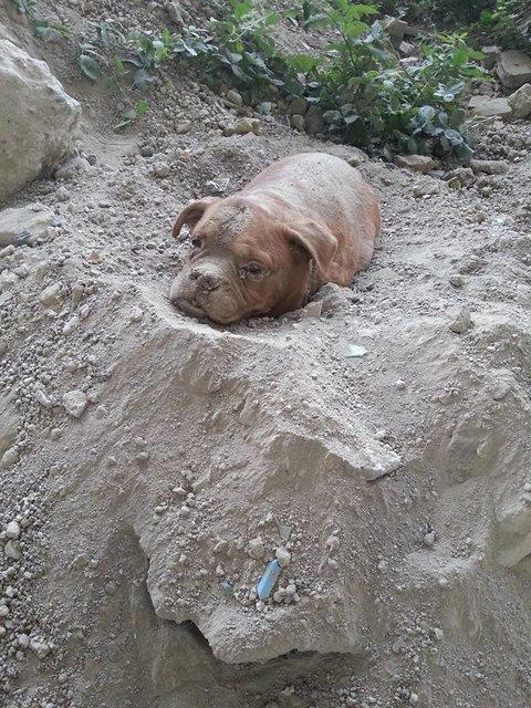フランス 犬 遺棄