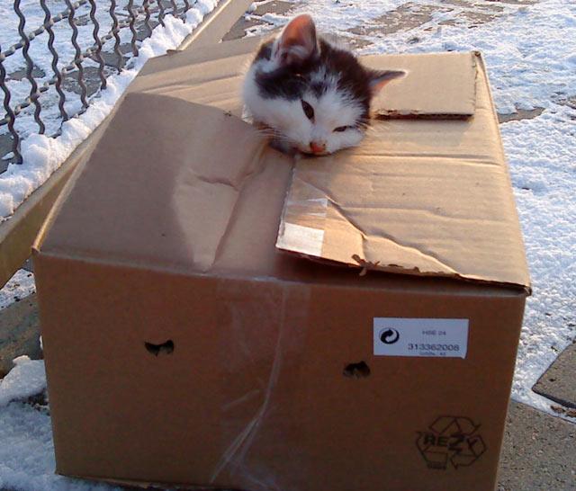 ティアハイム 捨て猫