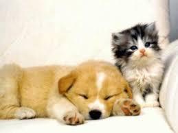 眠る子犬と子猫
