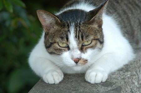 bosscat1.jpg