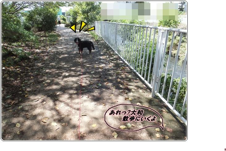 2015-9散歩に行くよ