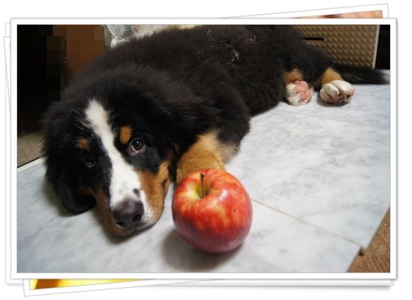 2015-9りんごといっしょにモデル