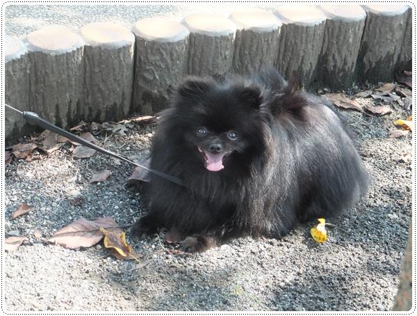 2015-10アナキンちゃん