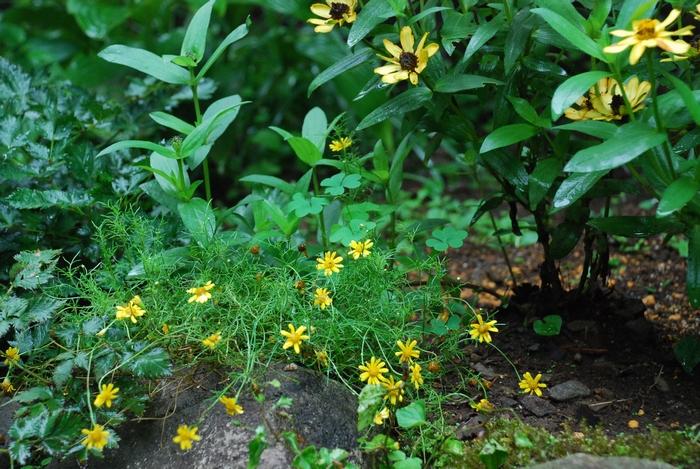 新しい花壇13
