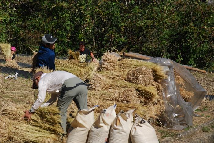 稲わらの整理とお米の入った袋62