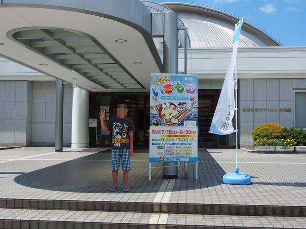 カブトガニ博物館①