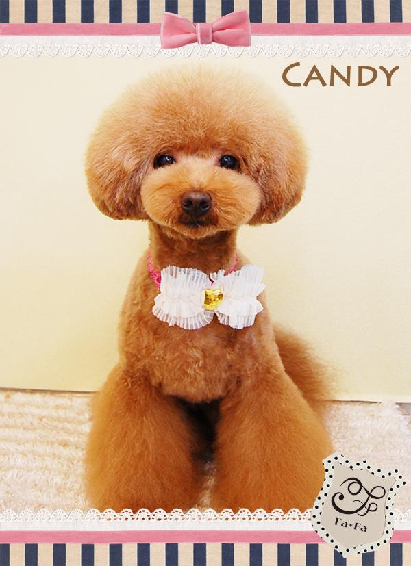 キャンディちゃん9-1