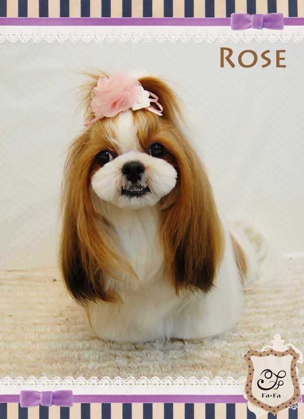 ROSEちゃん9-2
