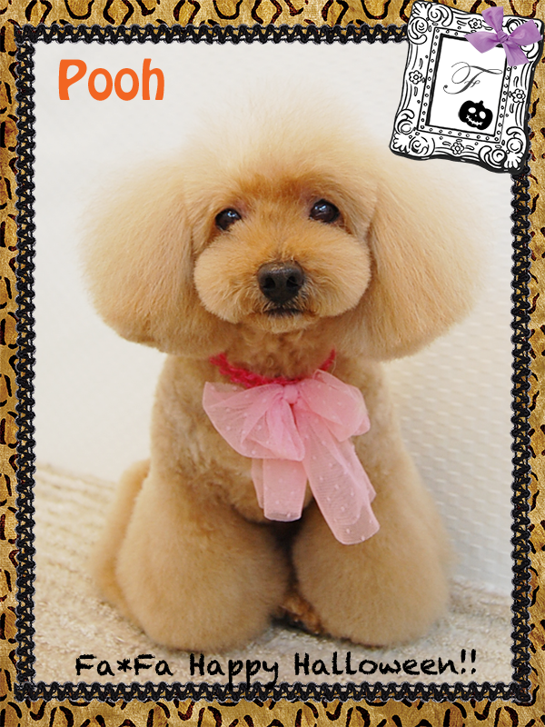 poohちゃん10-1