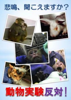 ポスター 動物実験反対250