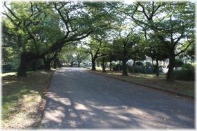 150923E 005緑ヶ丘墓地32