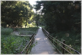 150923E 016東高根森林公園32