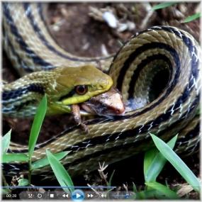 150919E 999蛇食E-SQ