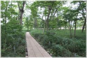 151010E 023保護樹林@横川下原P32