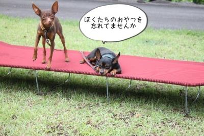 2015_07_18_9999_77.jpg