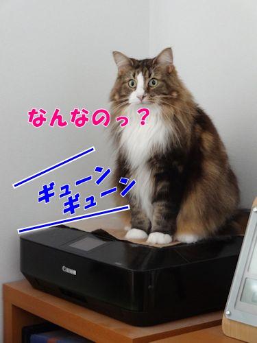 2015091107t.jpg