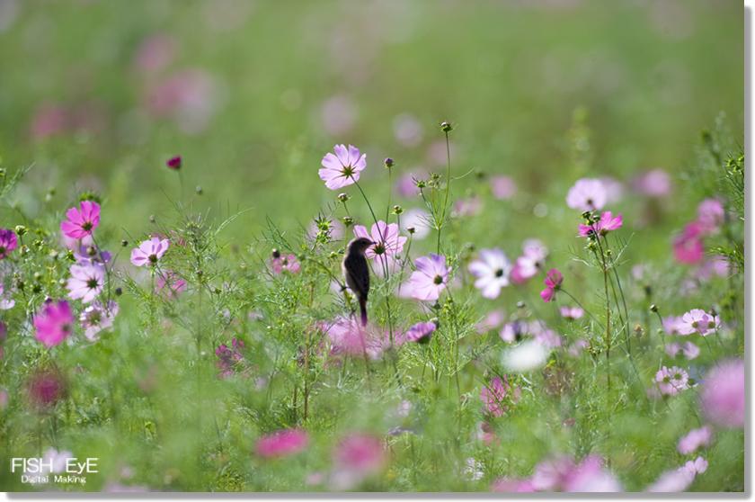151008-kosumesu11.jpg