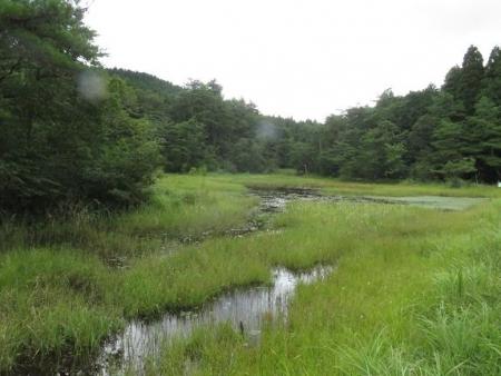 2回目の樫原湿原 060