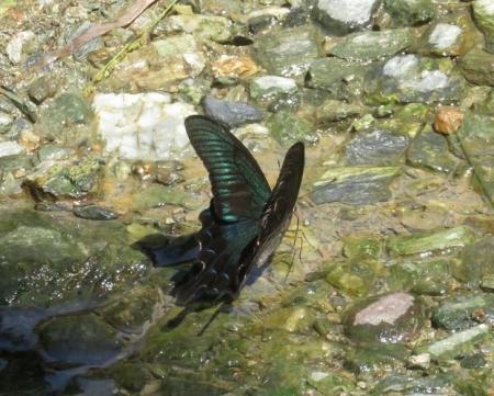 清水蝶のションベン 045