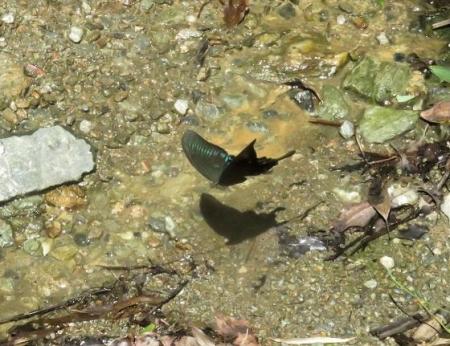 清水蝶のションベン 062