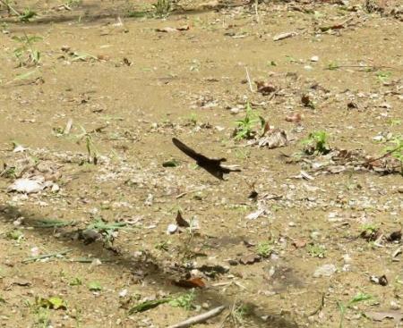 清水蝶のションベン 055