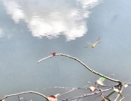 清水蝶のションベン 081