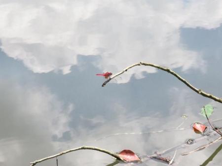 清水蝶のションベン 066