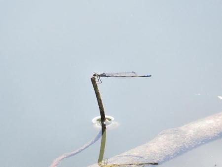 清水蝶のションベン 064