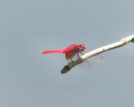 清水蝶のションベン 079