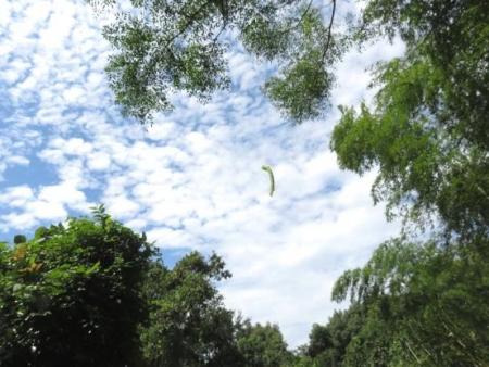 清水の蝶達 038