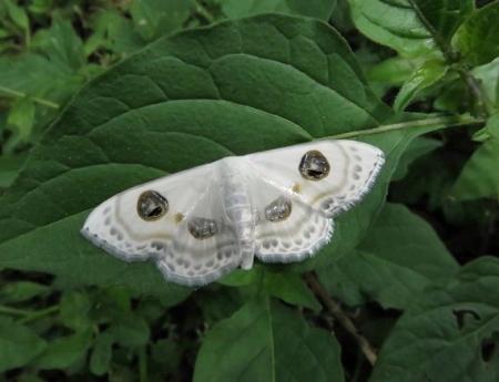 清水の蝶達 001