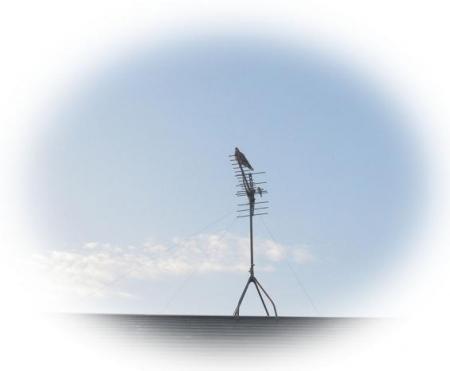 朝鳥 001