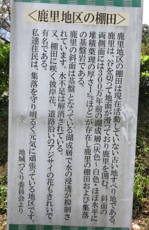 御泊まり蝶星野彼岸花 072