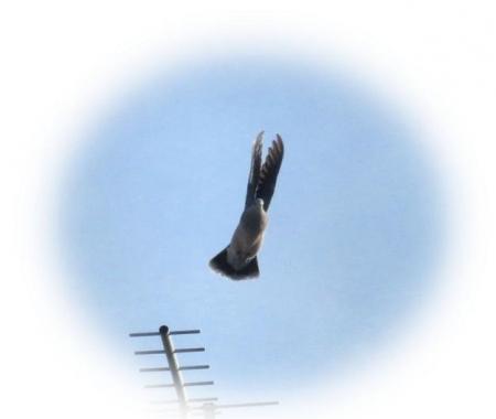 鳩飛ぶ 004