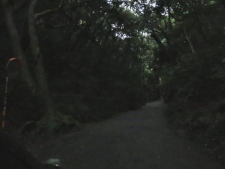 雨清水センブリ天山 010