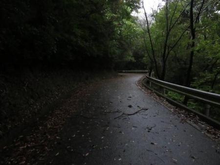 雨清水センブリ天山 061