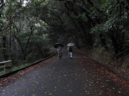 雨清水センブリ天山 067