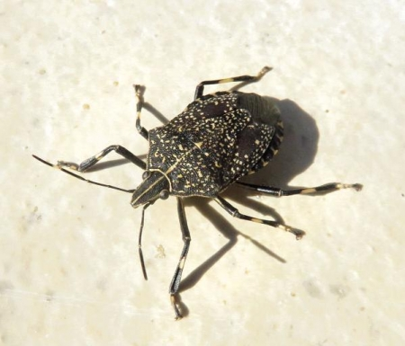 昆虫 022