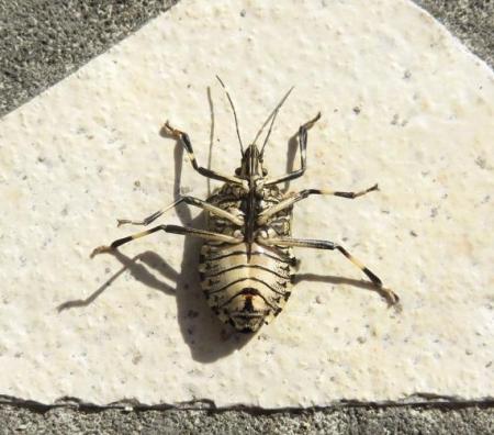 昆虫 004
