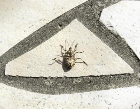 昆虫 003